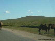 mongolia_2009_18-1