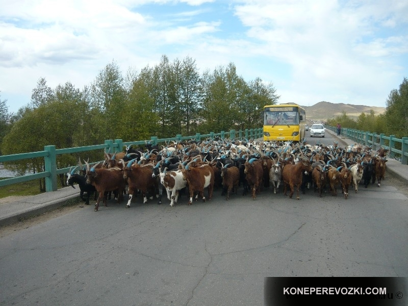 mongolia_2009_47-1
